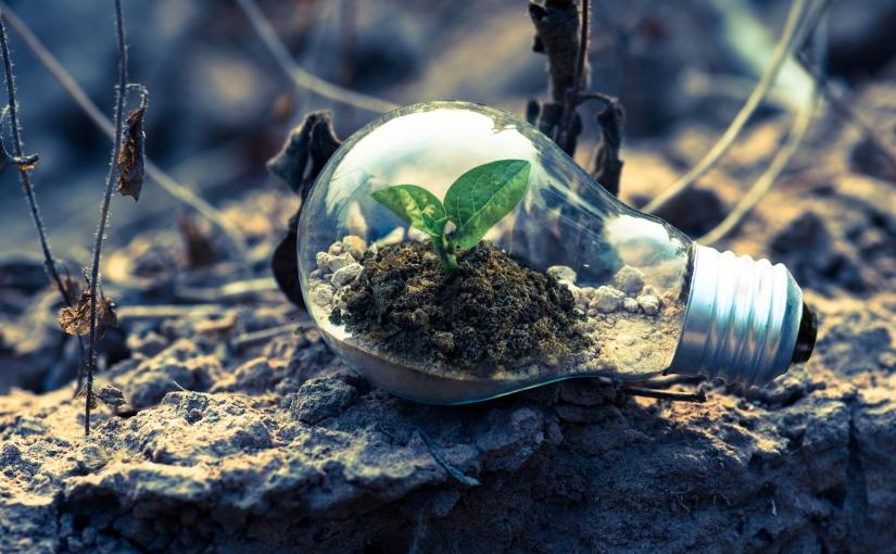 Sustain your bulbs